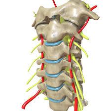 Mri Chandigarh Cervical spine